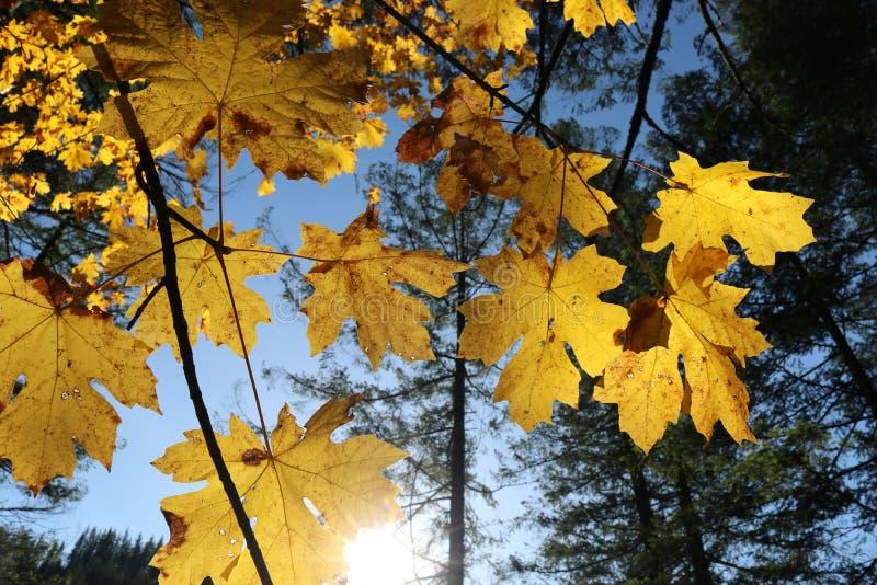 De Rivierkloof van Colombia in de herfst, Washington stock fotografie