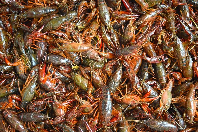 De rivierkreeften koken stock foto