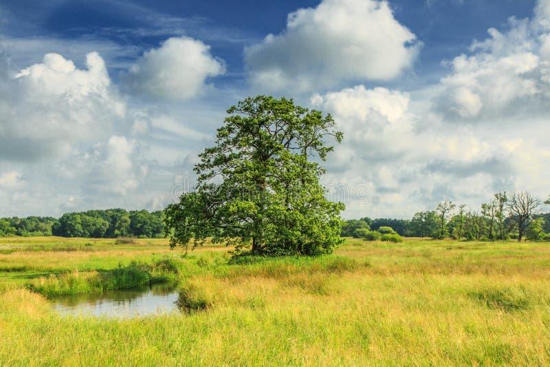 De Riviervallei van landschapsdeurzediep met moerassen en solitaire boom tegen achtergrond met mooie Nederlandse bewolkte hemel stock afbeelding