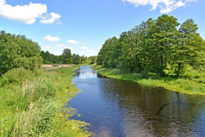 De rivierweide in de zomer zonnige dag Het gebied van Kaliningrad stock afbeelding