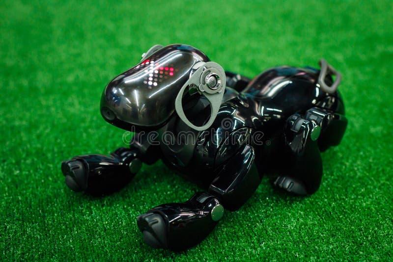 De robothond Aibo van zwarte kleur ligt op een groen kunstmatig gazon stock fotografie