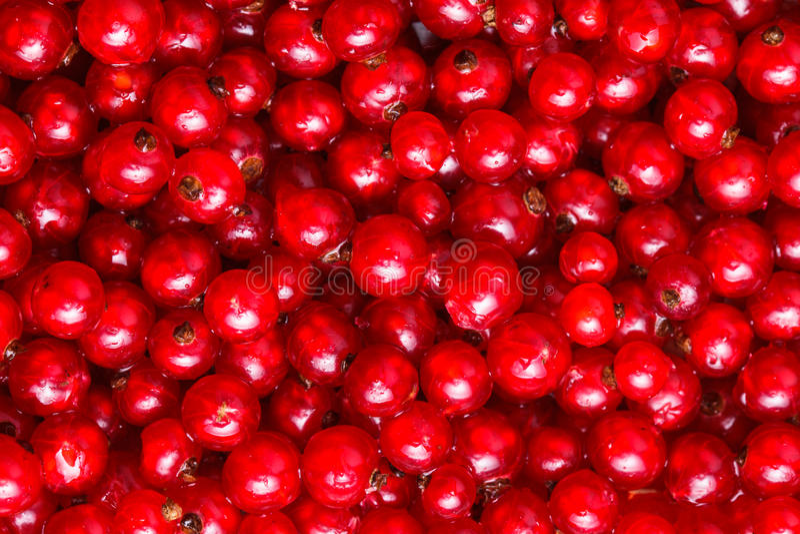De rode aalbes royalty-vrije stock foto's