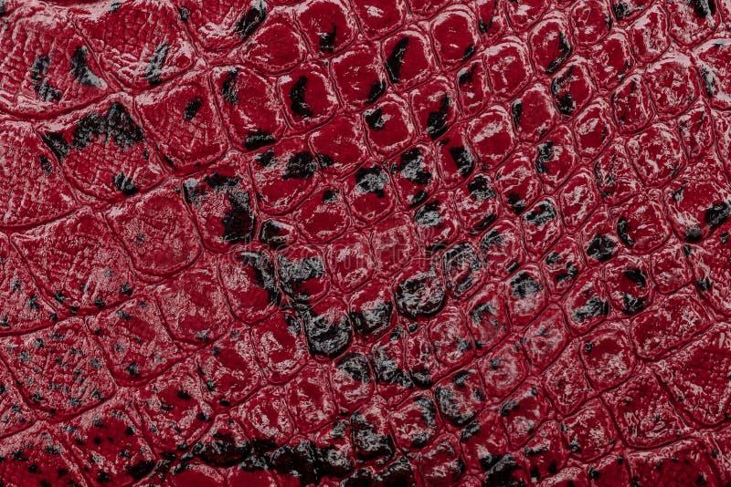 De rode achtergrond van de leertextuur Brede die Hoeklens door Lens GLB in het Midden wordt behandeld Reptiel huid stock afbeelding
