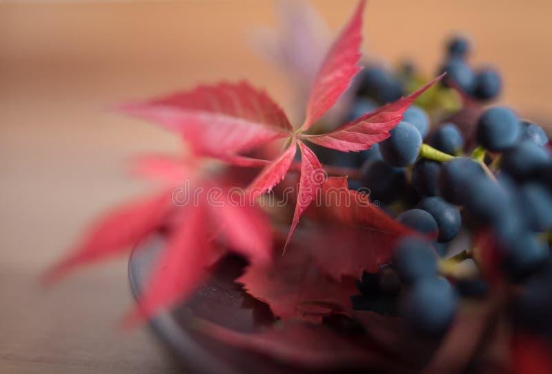de rode achtergrond van het de bessenstilleven van het bladerenclose-up macro blauwe bokeh stock afbeeldingen