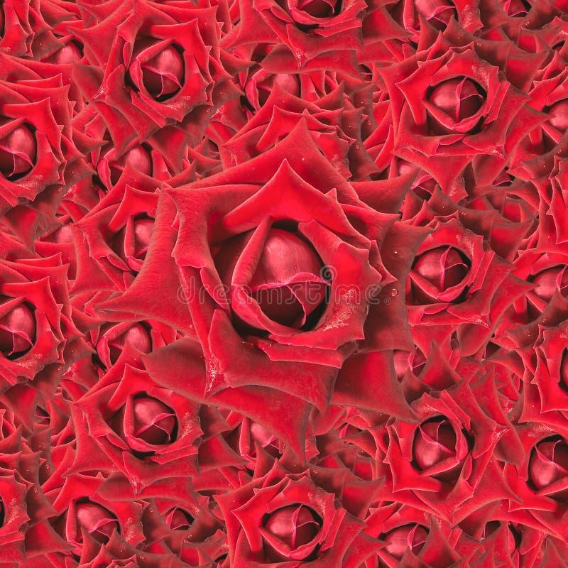 De rode achtergrond van Rozen royalty-vrije stock fotografie