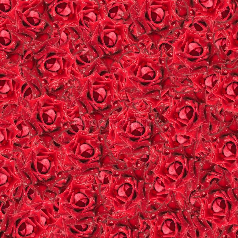 De rode achtergrond van Rozen royalty-vrije stock afbeeldingen