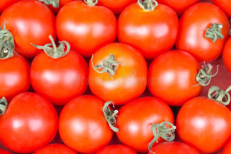 De rode achtergrond van de tomatenclose-up stock afbeelding