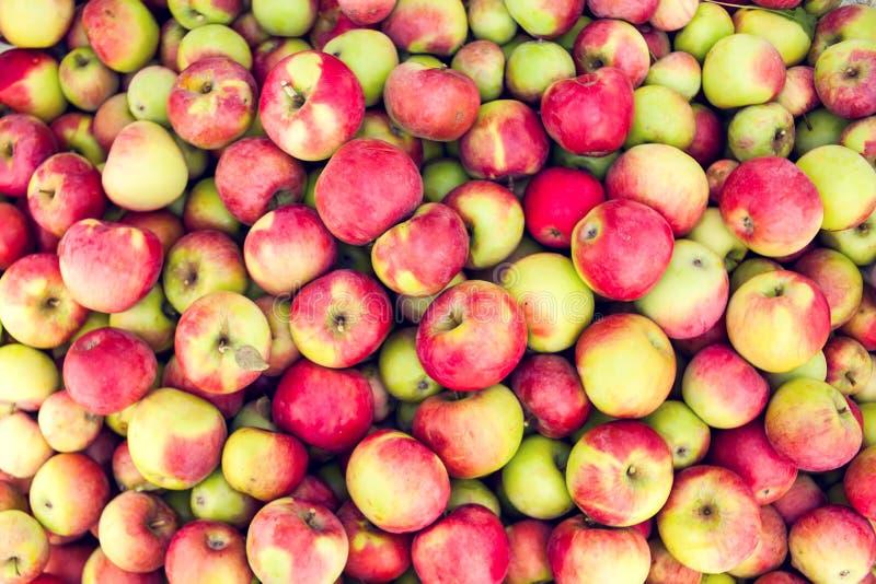 De rode achtergronden van het appel ruwe fruit, gezond organisch vers product royalty-vrije stock foto's