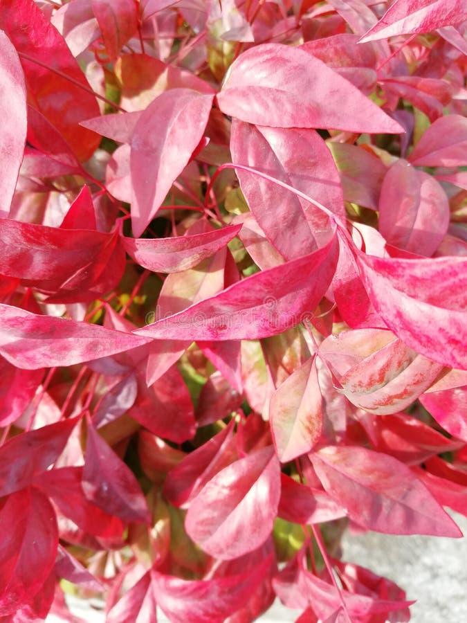 De rode bladeren van Nice voor elke achtergrond stock foto