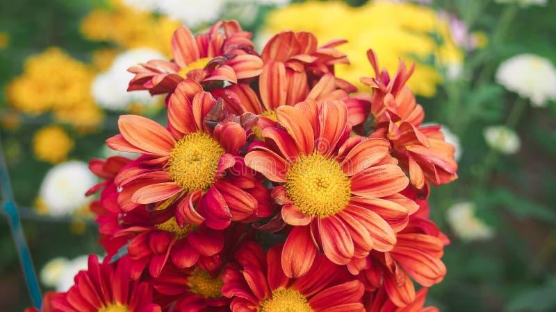 De rode bloem stock foto