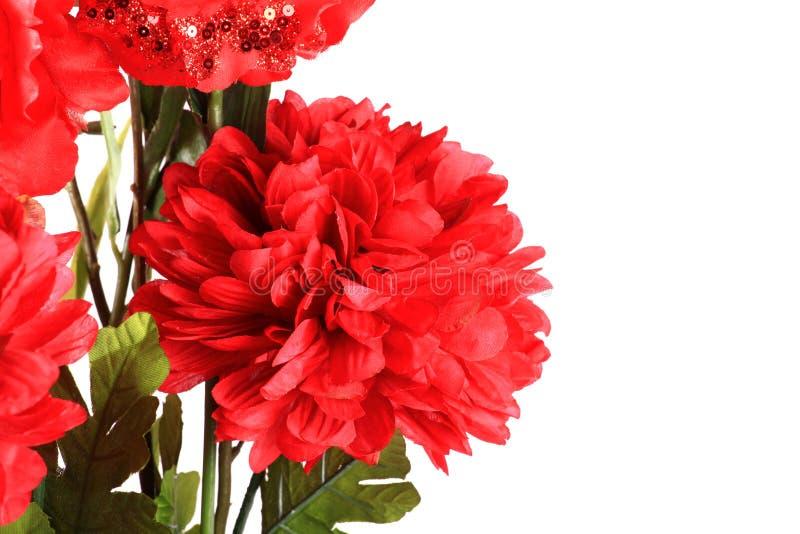 De rode bloem van Dalia royalty-vrije stock fotografie