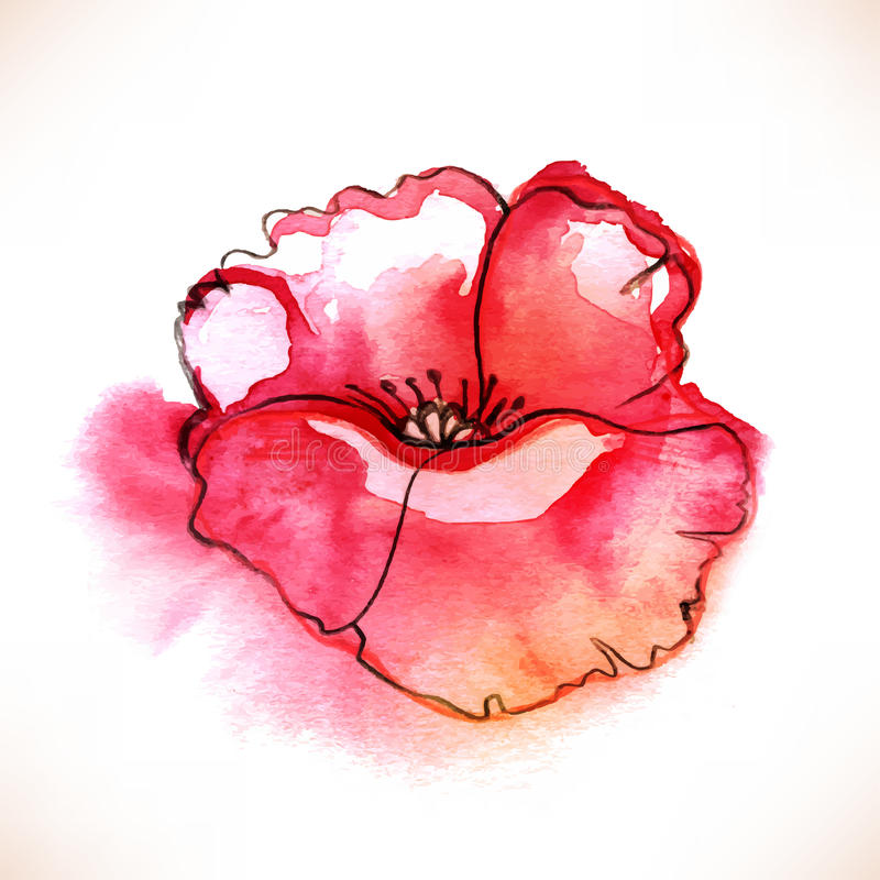 De rode bloem van de Waterverfpapaver over witte backgound stock illustratie