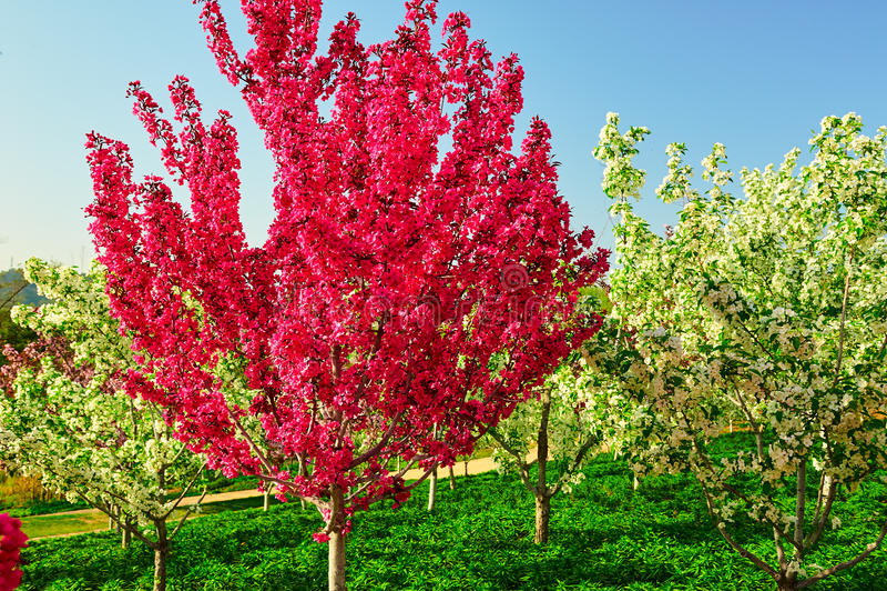 De rode bloemboom stock afbeeldingen
