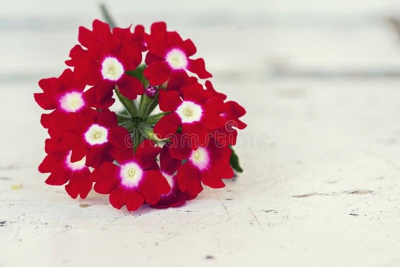 De rode bloemen sluiten omhoog op een witte houten achtergrond stock afbeeldingen