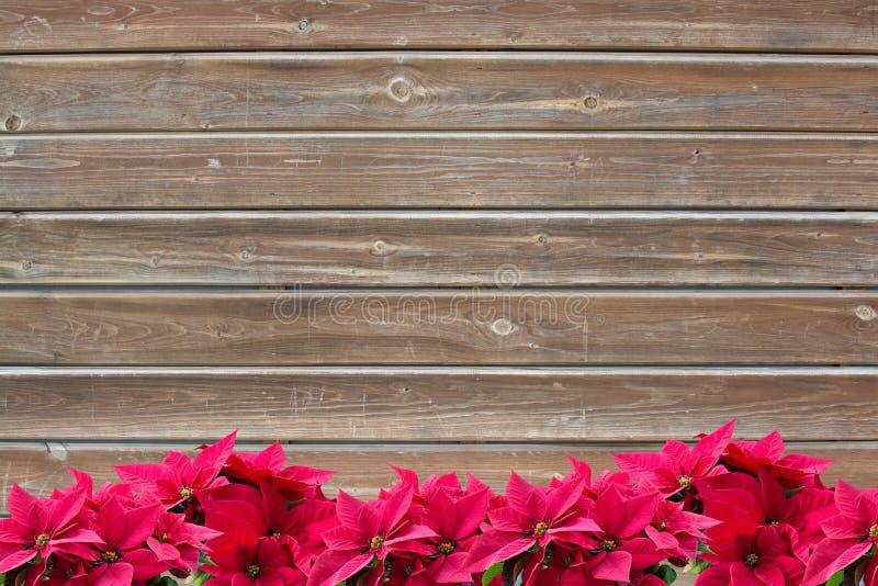 De rode bloemen van Kerstmispoinsettia op plankachtergrond royalty-vrije stock afbeelding