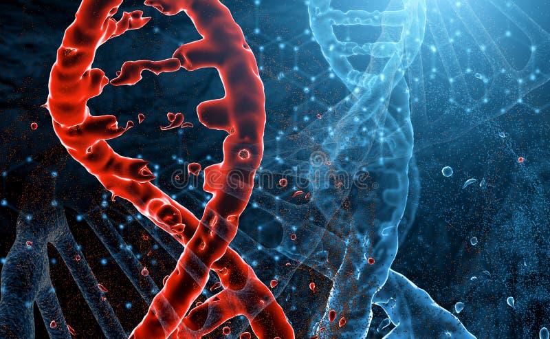 De rode en blauwe modellen van DNA-molecules snijden in ruimte Het bederf van rode DNA, het concept virus en letsel vector illustratie