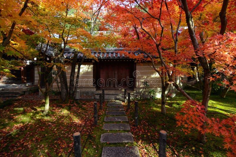 De rode en gele bomen van de dalingsesdoorn langs een weg aan een muur met poorten in Kyoto, Japan royalty-vrije stock foto's