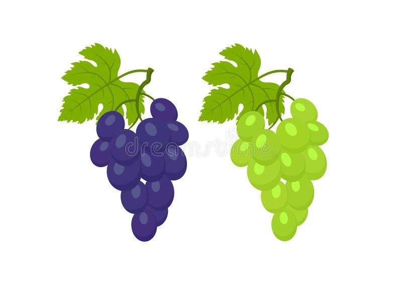 De rode en witte druiven met doorbladert geïsoleerd vectorbeeld van fruit royalty-vrije illustratie