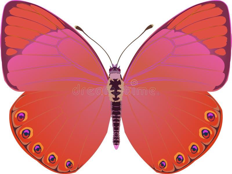 De rode fantasie van de vlinder stock illustratie
