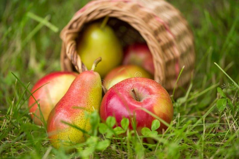 De rode gele appelen en de peren in een rieten mand verspreidden zich in groene gras in openlucht close-up stock foto's