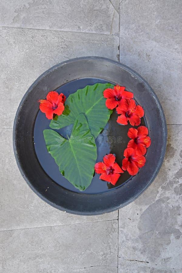 De rode hibiscus met grote yam verlaat het drijven op water in een reusachtige metaalpan royalty-vrije stock afbeelding