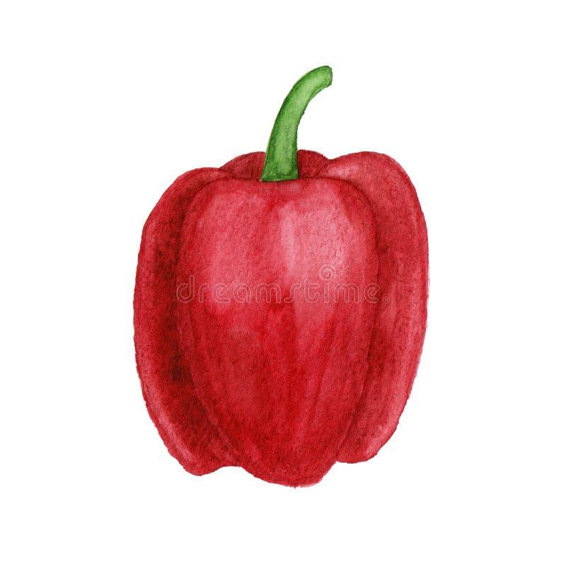 De rode illustratie van de groene paprikawaterverf die op witte achtergrond wordt geïsoleerd royalty-vrije stock afbeeldingen