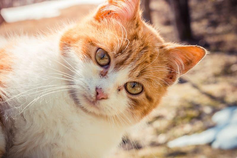 De rode kat is een groot plan royalty-vrije stock foto