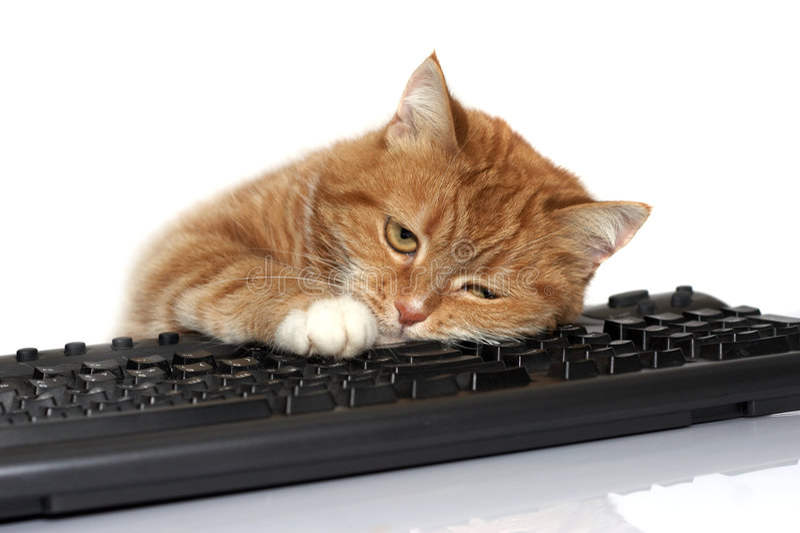 De rode kat legt op het toetsenbord royalty-vrije stock foto