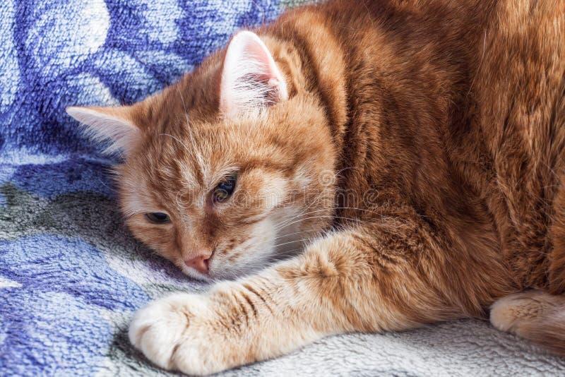 De rode kat rust op een deken royalty-vrije stock fotografie