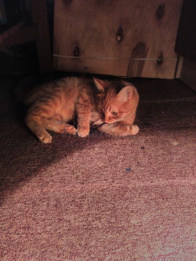 De rode kat ving een muis in de Studio van de kunstenaar royalty-vrije stock foto