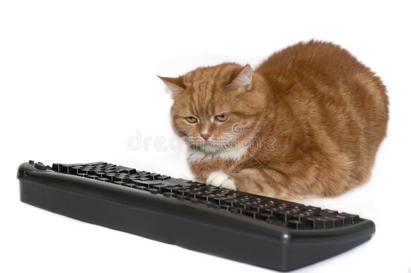 De rode kat zit dichtbij het toetsenbord stock foto's