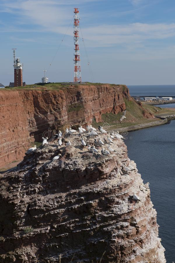 De rode klippen op eiland Helgoland Duitsland stock foto's