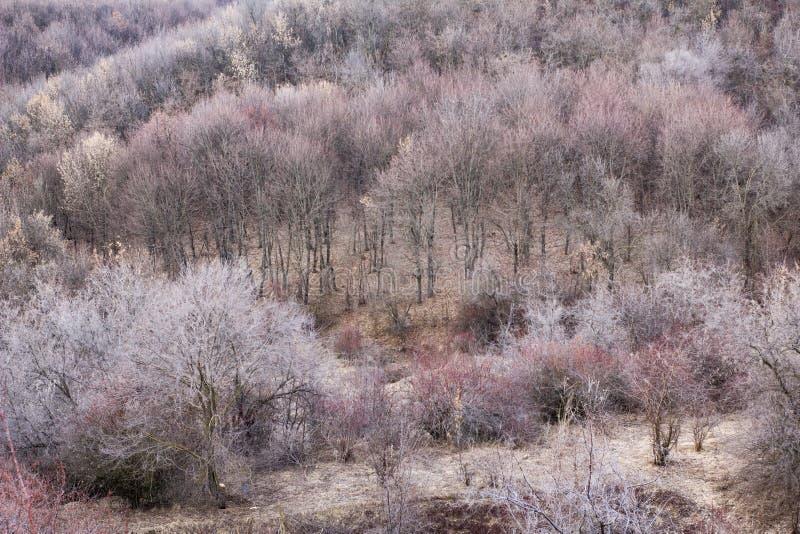 De rode lente boskielzog van slaap stock foto