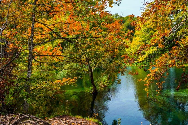 De rode oranje bladeren van de herfstbomen worden weerspiegeld in het groene koude water Draperende Plitvice-meren in Kroatië op  royalty-vrije stock foto