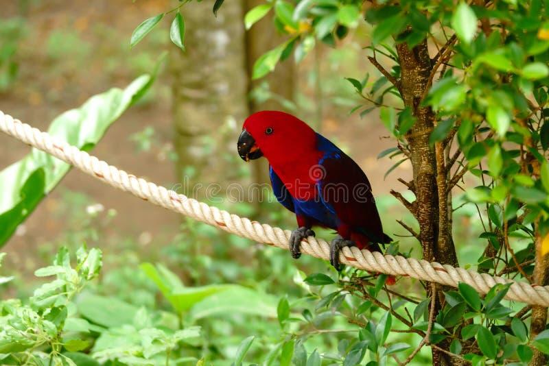 De rode papegaai zit op een kabel naast een boom Langs veroorzaakte het wild royalty-vrije stock fotografie