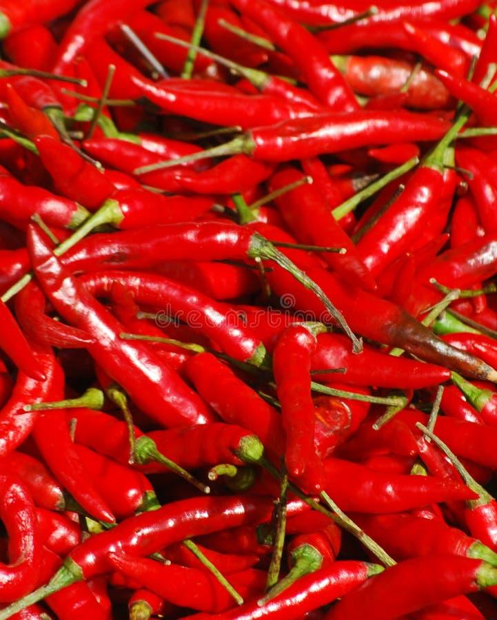 De rode Peper van de Spaanse peper stock fotografie