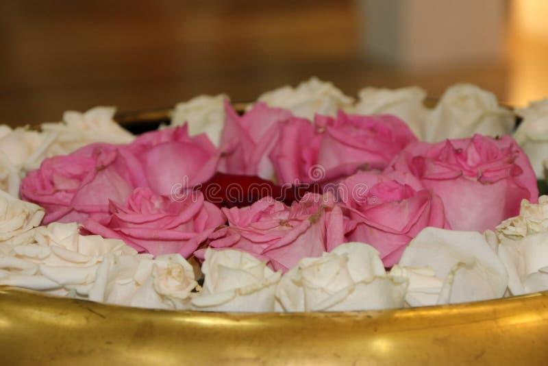 De rode roze en witte kleur van nam op het water in de gouden mini ronde vijver toe royalty-vrije stock fotografie