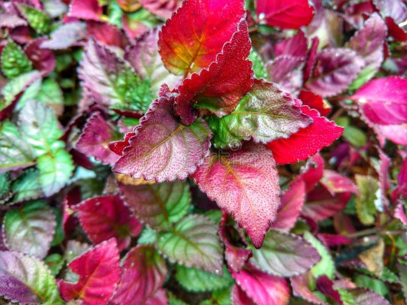 De rode roze spruit van het bloem groene park stock afbeeldingen