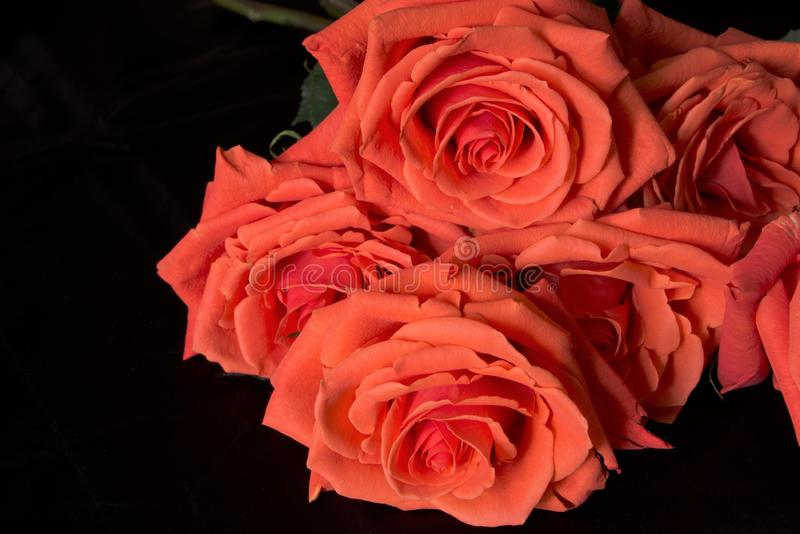 De rode rozen van een baksteen stellen op een zwarte achtergrond in de schaduw, rouwend samenstelling royalty-vrije stock foto