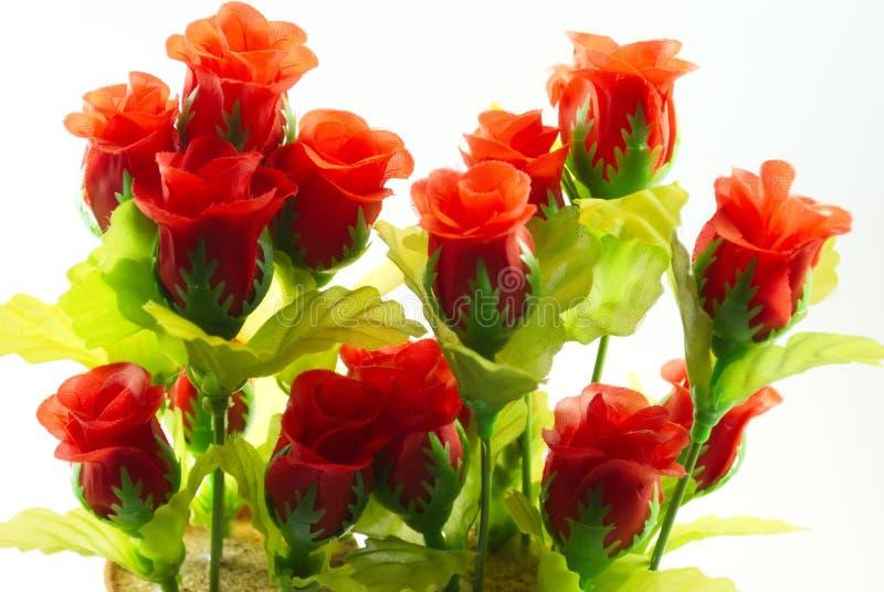 De rode rozen vertegenwoordigen liefde royalty-vrije stock foto's