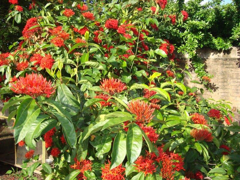 De Rode Tuin stock afbeeldingen