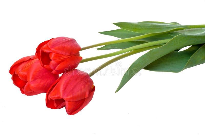 De rode tulp bloeit boeket De groetkaart van Pasen of van de dag van Valentine ` s Met ruimte voor uw groeten stock fotografie