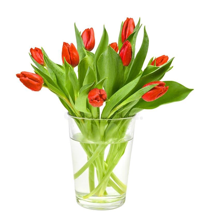 De rode tulpen in kleivaas solated op witte achtergrond royalty-vrije stock afbeeldingen