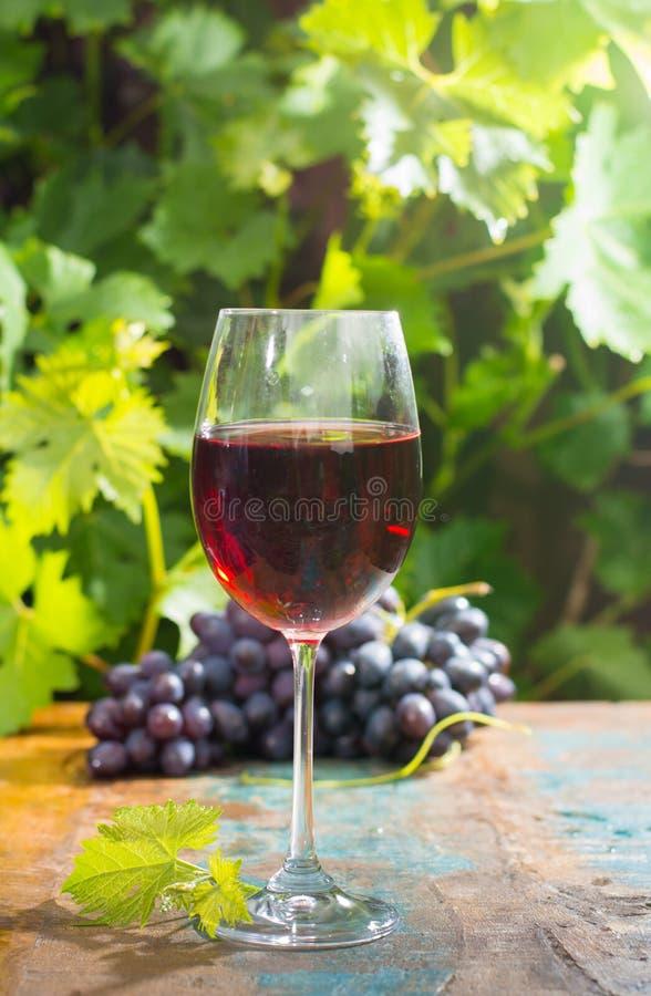 De rode wijn van het wijnglas wirh, openluchtterras, wijn het proeven in zonnig royalty-vrije stock fotografie