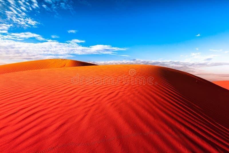 Dierlijke sporen in rood zandduin royalty-vrije stock foto's