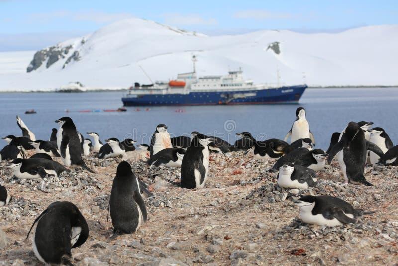 De roekenkolonie van de Chinstrappinguïn in Antarctica stock afbeelding