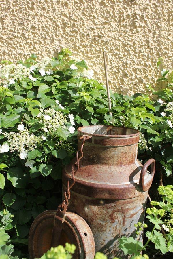 De roestige melk kan in tuin stock foto