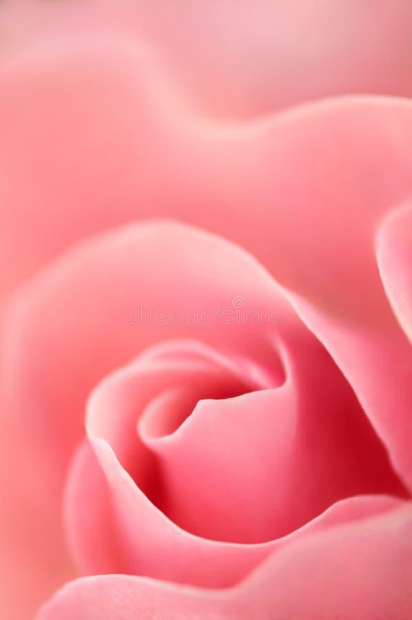 De romantische Liefde nam toe stock afbeeldingen