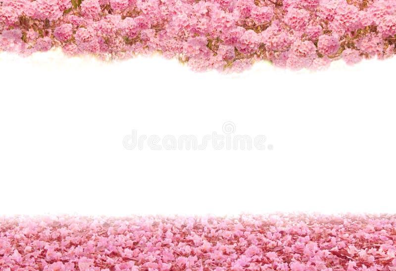 De romantische tunnel van roze bloembomen stock foto