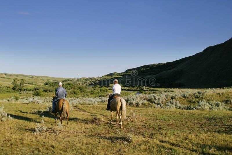De Ronde van het vee omhoog royalty-vrije stock foto